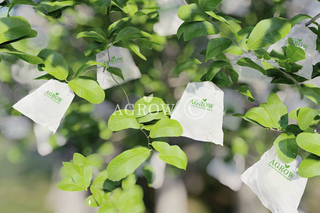 Guava Growing Bags